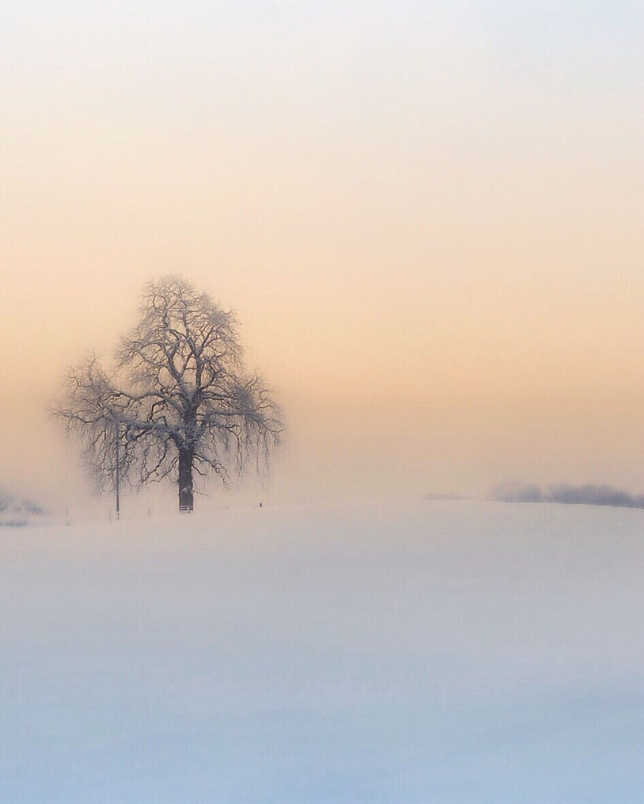 Winter image Winter Bare Tree Tranquility Beauty In Nature Landscape Minimalism Winterwonderland Oslo Norway Visitnorway Visitoslo Tree_collection