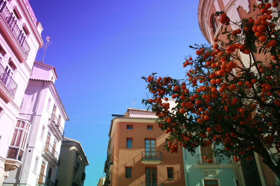 Architecture Blue Sky Building Exterior Built Structure Cityscape Clear Sky Colourful Buildings Growth Low Angle View Orange Tree Oranges On Tree Tree