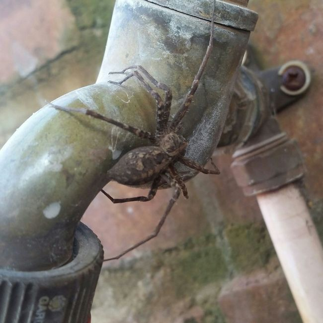 Friendly Spider Visiting for a few Drops of Water