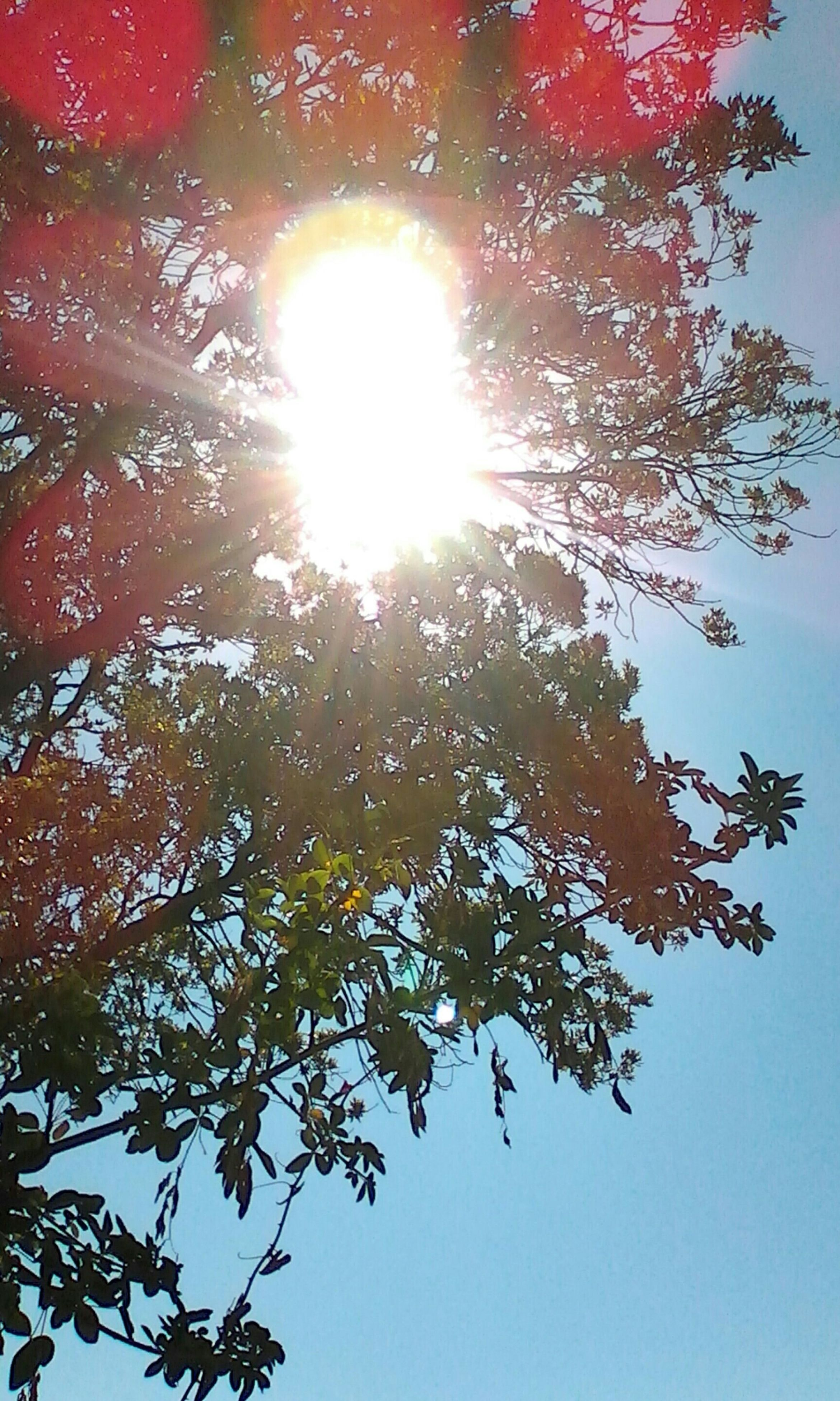 low angle view, tree, branch, sun, growth, nature, beauty in nature, sunlight, tranquility, sky, lens flare, sunbeam, day, outdoors, no people, scenics, change, bright, high section, directly below, sunny, tranquil scene, close-up
