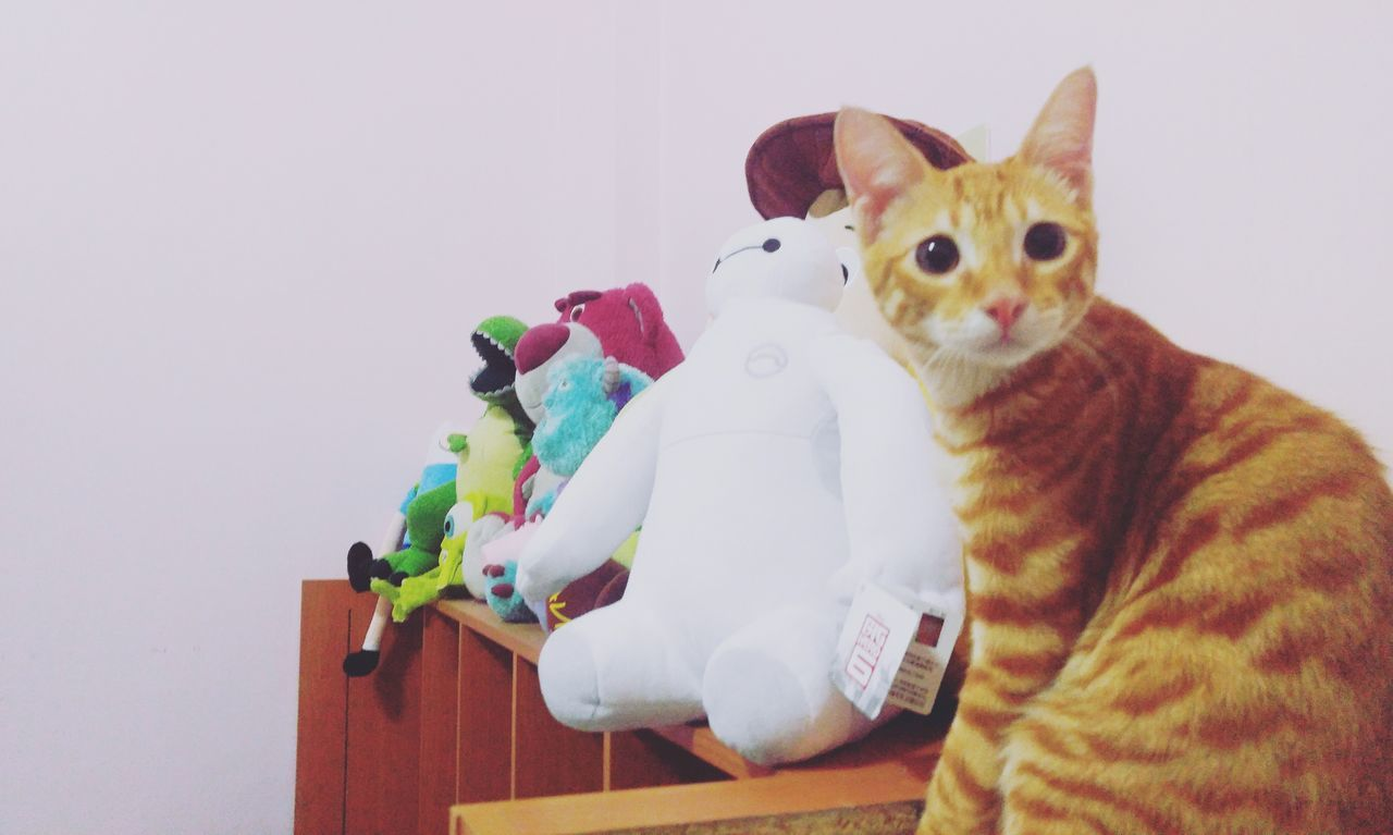 Cat♡ Cat Lovers Cat Love Disney Pixar  Toys