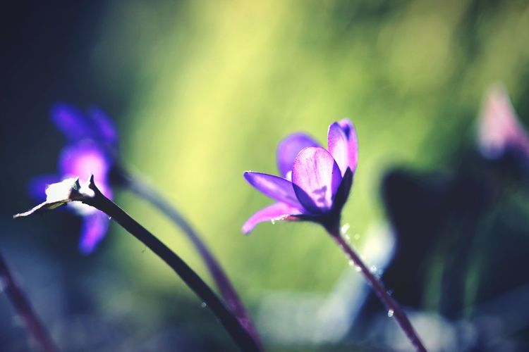 Flower Purple Blue Lilies Beauty In Nature Blossom Flower Head Close-up Macro Beauty In Nature Live For The Story