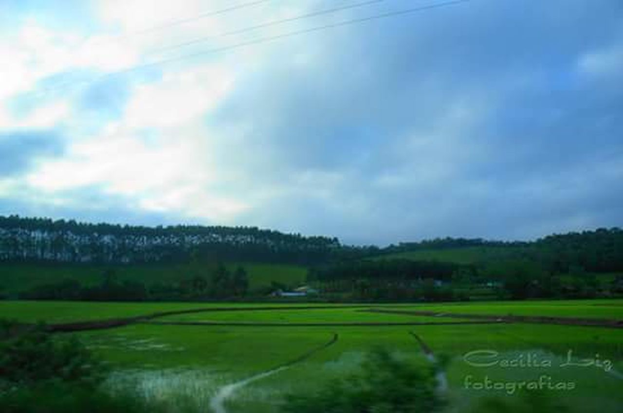 Rice - Cereal Plant No People Landscape Beauty In Nature Day Rice Planting Scenics Outdoors Rice Farm Sky Riceplantation