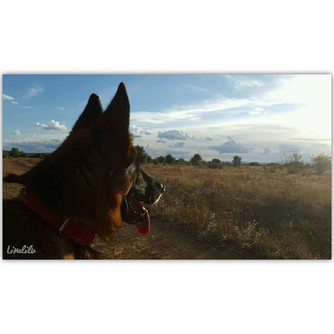 Currete 💕 🐾 Leon LaBañeza Vacaciones Estoesvida Be_one_natura Loves_world TodoEs_Animales Igersspain SPAIN Ig_spain Descubriendoigers @Instagramers Estaes_de_todo Estaes_animal EstaEs_Universal_4 Ke_animal Pets_of_our_world World_bestanimals Ir_Animal Loves_Animal PastorAleman Perros  Perrosdeinstagram Dogsofinstagram Mascotas Mascoteros PonunPerroentuVida PonunaMascotaentuVida CurreteGrande