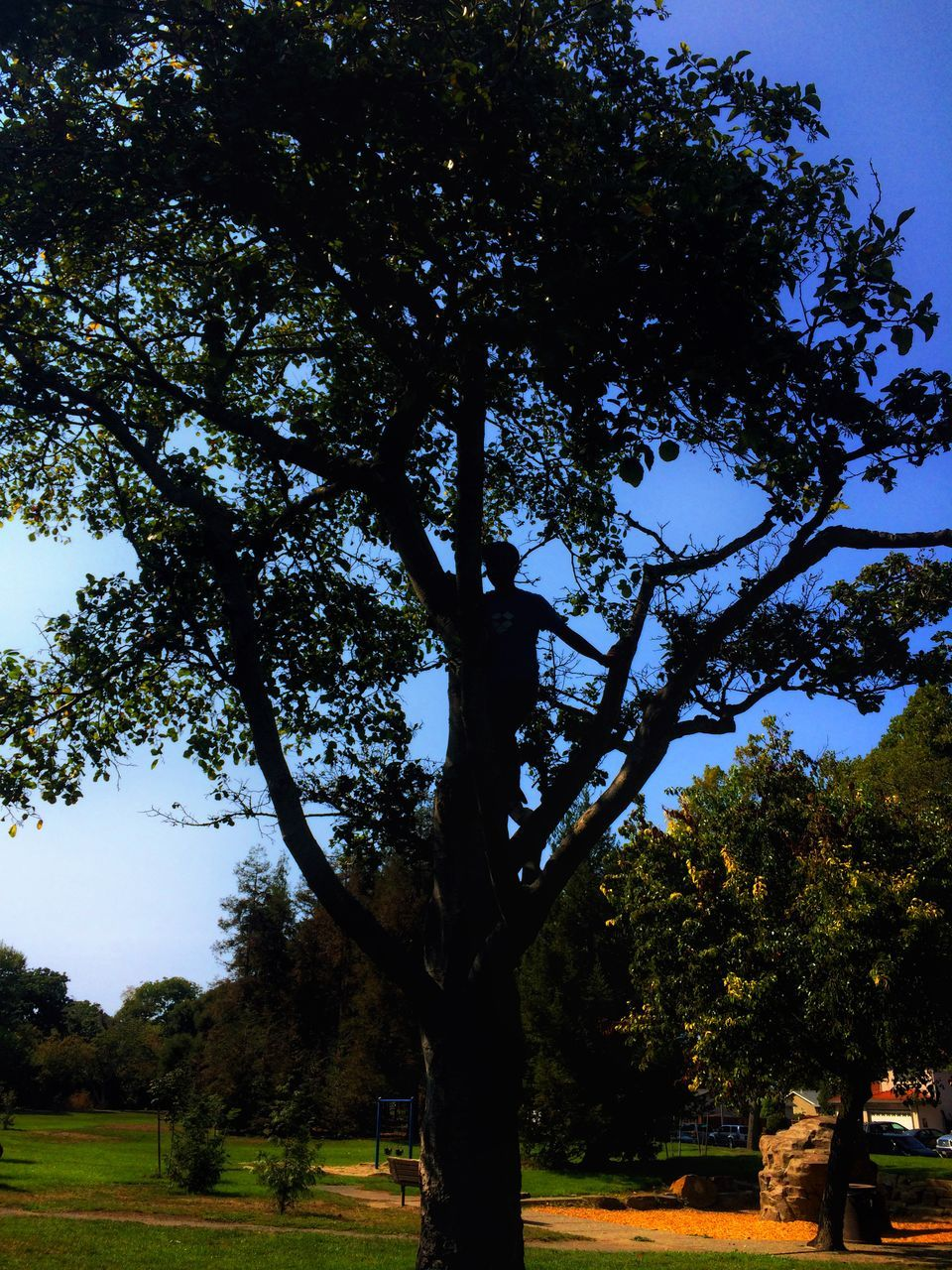 tree, growth, nature, day, tranquility, no people, outdoors, scenics, beauty in nature, branch, sky