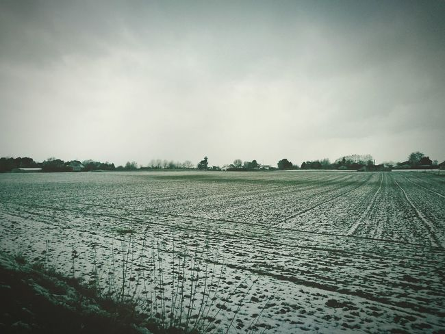 Agriculture Farm Sky Outdoors Nature No People