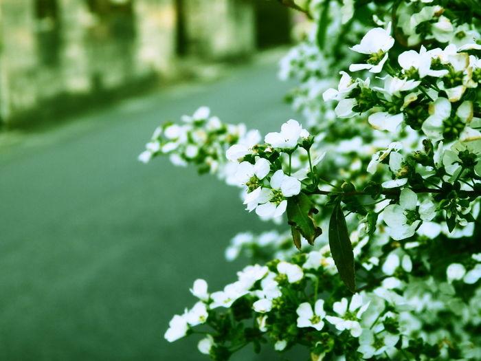 花 Flowers Flower