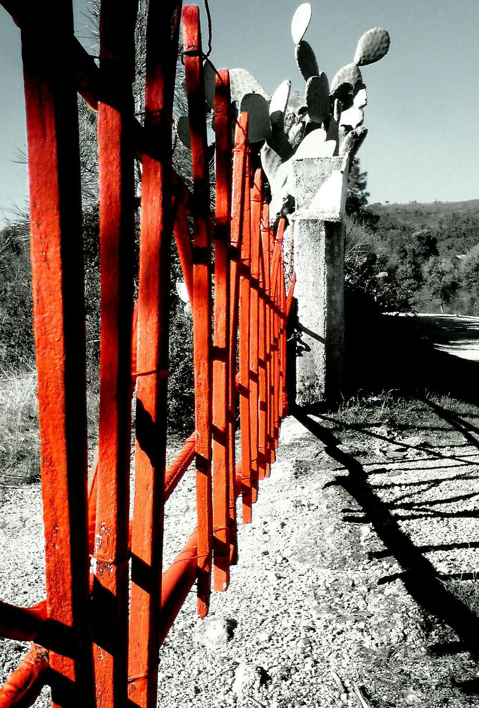Red Gate Black And White Photography Gate Gates Gates And Fences Shadows & Lights Sunny Day Portugal