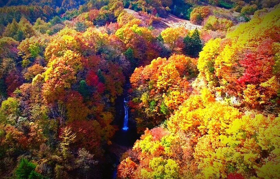 Beautiful autumn has come on our town Nature Beauty In Nature Hello World Outdoors Autumn OpenEdit Japan Leeves Multi Colored