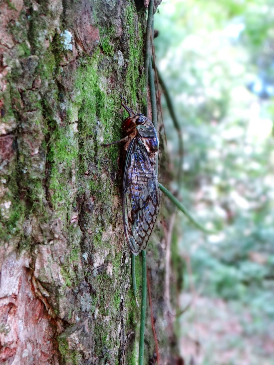 animal themes, one animal, animals in the wild, tree trunk, insect, wildlife, animal wildlife, day, no people, nature, tree, close-up, butterfly - insect, growth, outdoors, full length, fragility