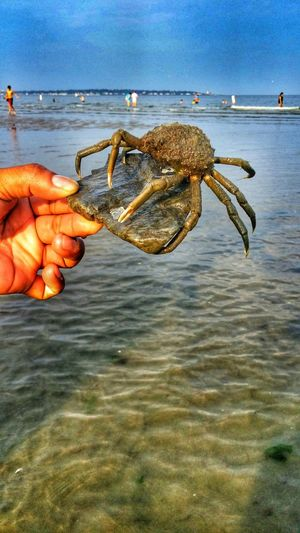 Found this little guy in shallow waters. Swimming Relaxing Beachphotography Life Is A Beach Android Photography