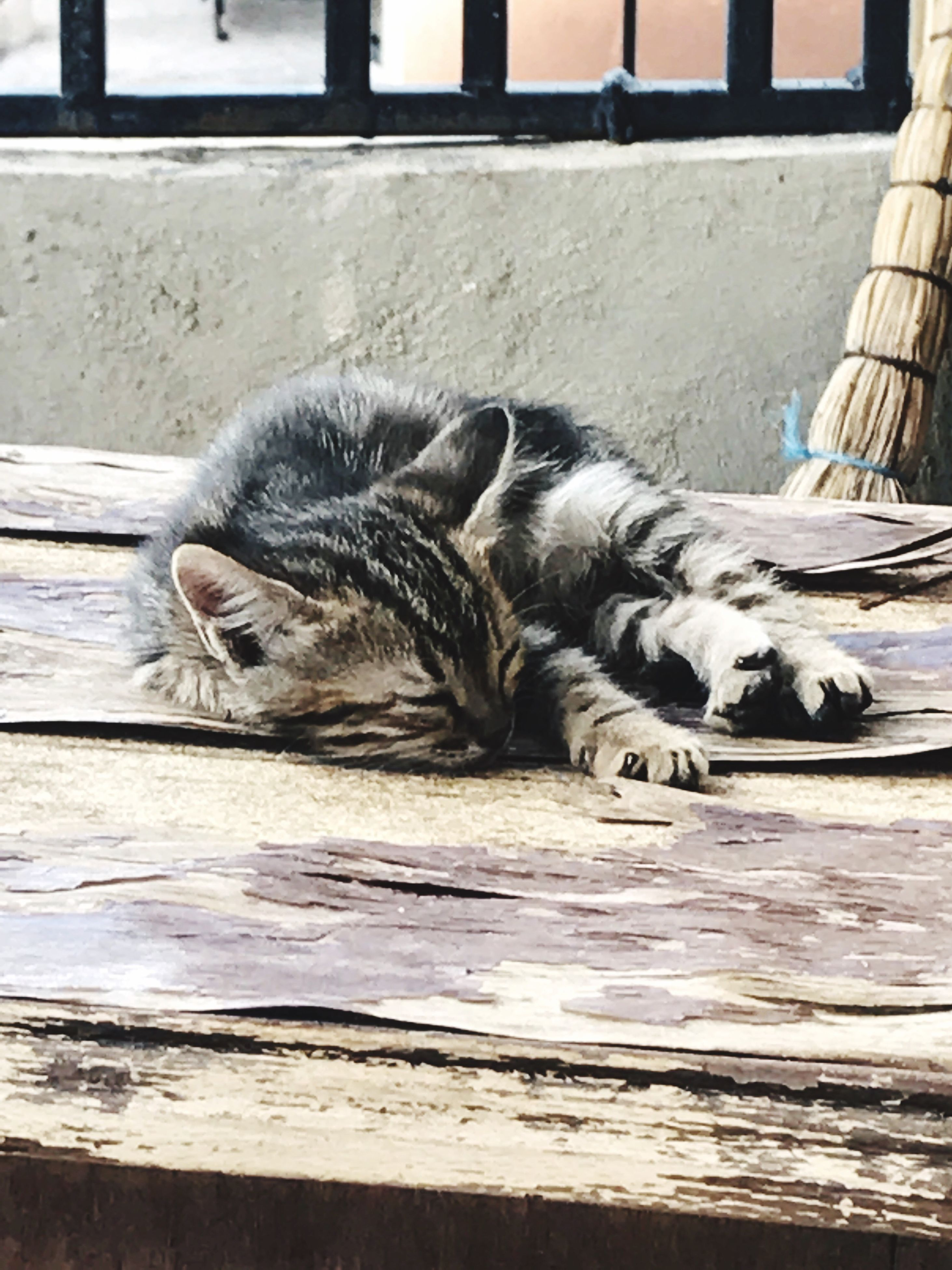 animal themes, domestic cat, one animal, domestic animals, feline, mammal, pets, sleeping, day, no people, relaxation, outdoors, close-up, nature