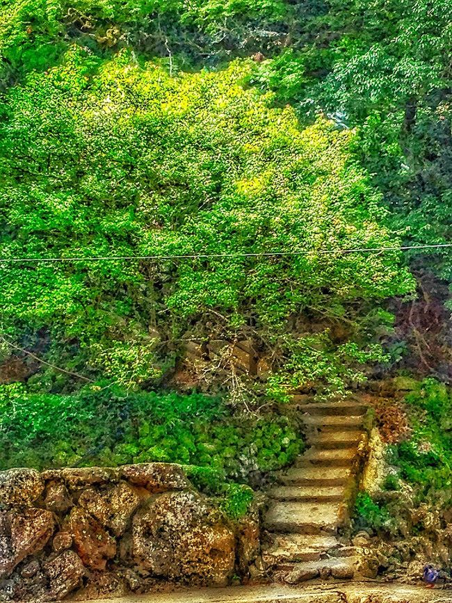 Near The Waterfall Creekside Trail Nobody Around TreePorn Stone Wall Rock - Object Rock Formation Natural Beauty EyeMe Best Shot - Landscape Walkway Green Green Green!  I LoveJapan Ortia