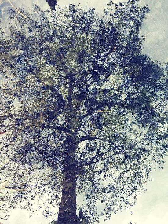 Growth Day No People Nature Tree Outdoors The Great Outdoors - 2017 EyeEm Awards