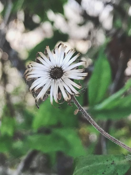 Flower Nature Growth Fragility Focus On Foreground Beauty In Nature Flower Head Petal Freshness Close-up Plant Outdoors No People Blooming Pollen Day