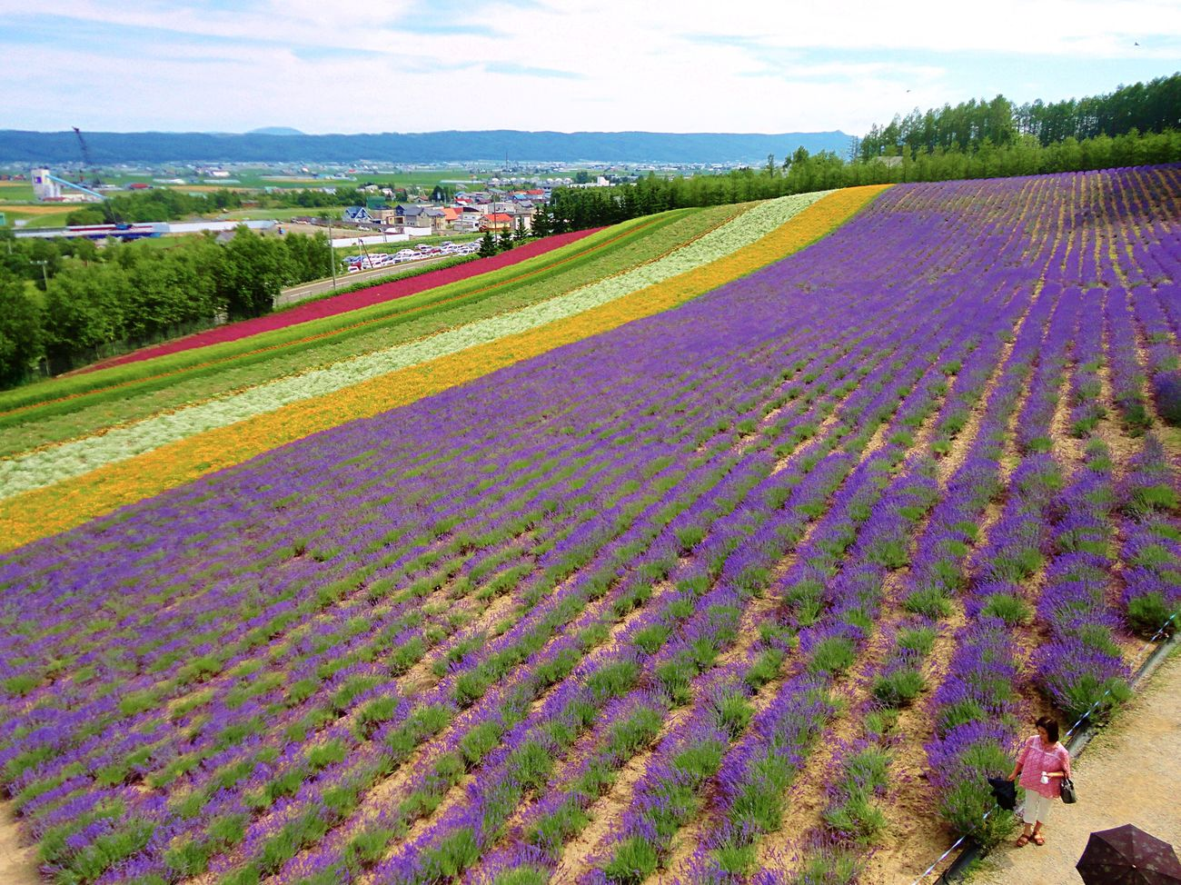 Farm Tomita Lavender Field Furano Hokkaido Flower Fantasy Lavender Flower Carpet Viewpoint ファーム富田 富良野 北海道 ラベンダー Hokkaido,Japan Flower Collection Colour Of Life Lavenderflower Lavender Farm Lavender Flowers Lavender Festival 2011memories Beautiful Flowers Enjoying Life Flower Field EyeEm Gallery ASIA