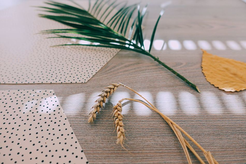 Pink Color Springtime Leaf Spring Table Indoors  Close-up Sunlight Sunshine Lifestyles Life Plant Sunny Nature_collection Nature Light And Shadow Yellow Green Color Focus On Foreground Still Life Palm Perspective Art Is Everywhere Break The Mold
