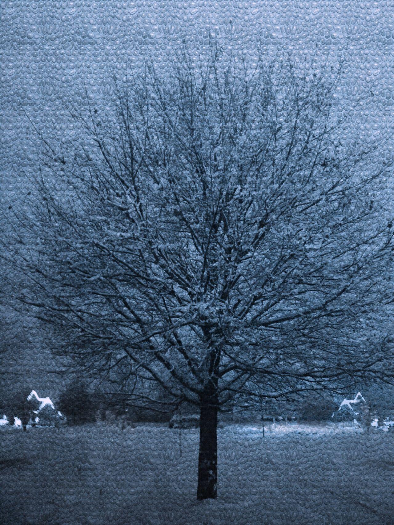 Winter Wonderland Winter Wintertime Winter Trees Winter Sky Winter Landscape Winter Is Coming Cold Temperature Cold Days Cold Winter ❄⛄ Cold Weather Oswego, IL