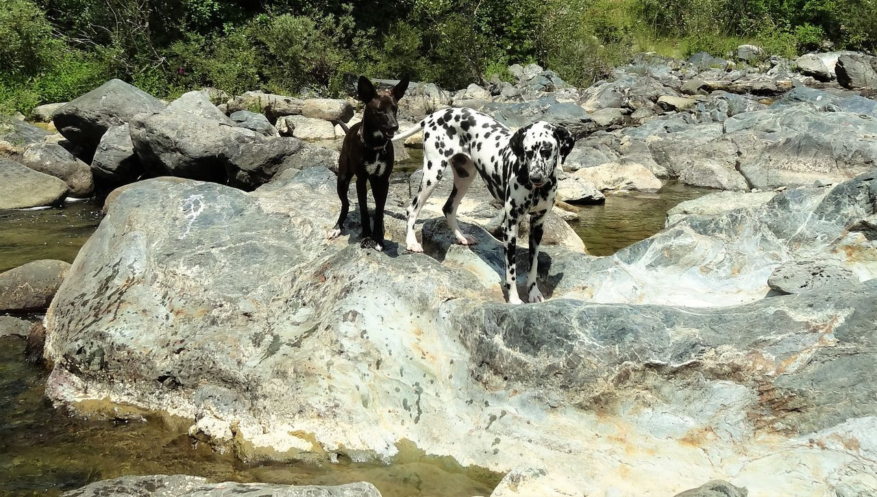 Animal Themes Beauty In Nature Black Dog Black Puppy Dalmatian Dalmatian Dog Dalmatiansofinstagram Dogs Dogs Of EyeEm Dogsofinstagram Nature No People River Riverside Rocks Rocks And Water