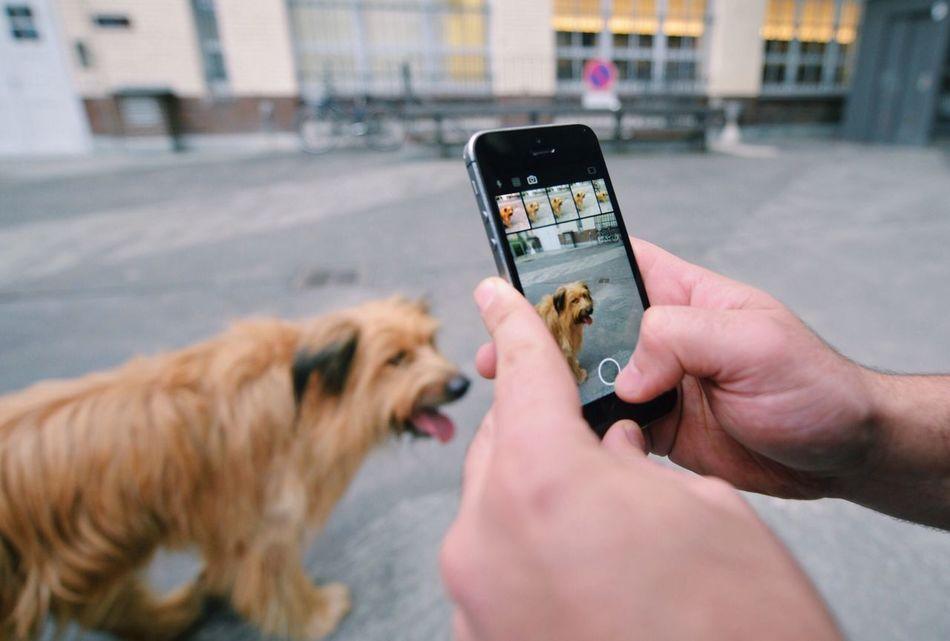 Beautiful stock photos of mobile, Animal, Animal Themes, Berlin, Communication
