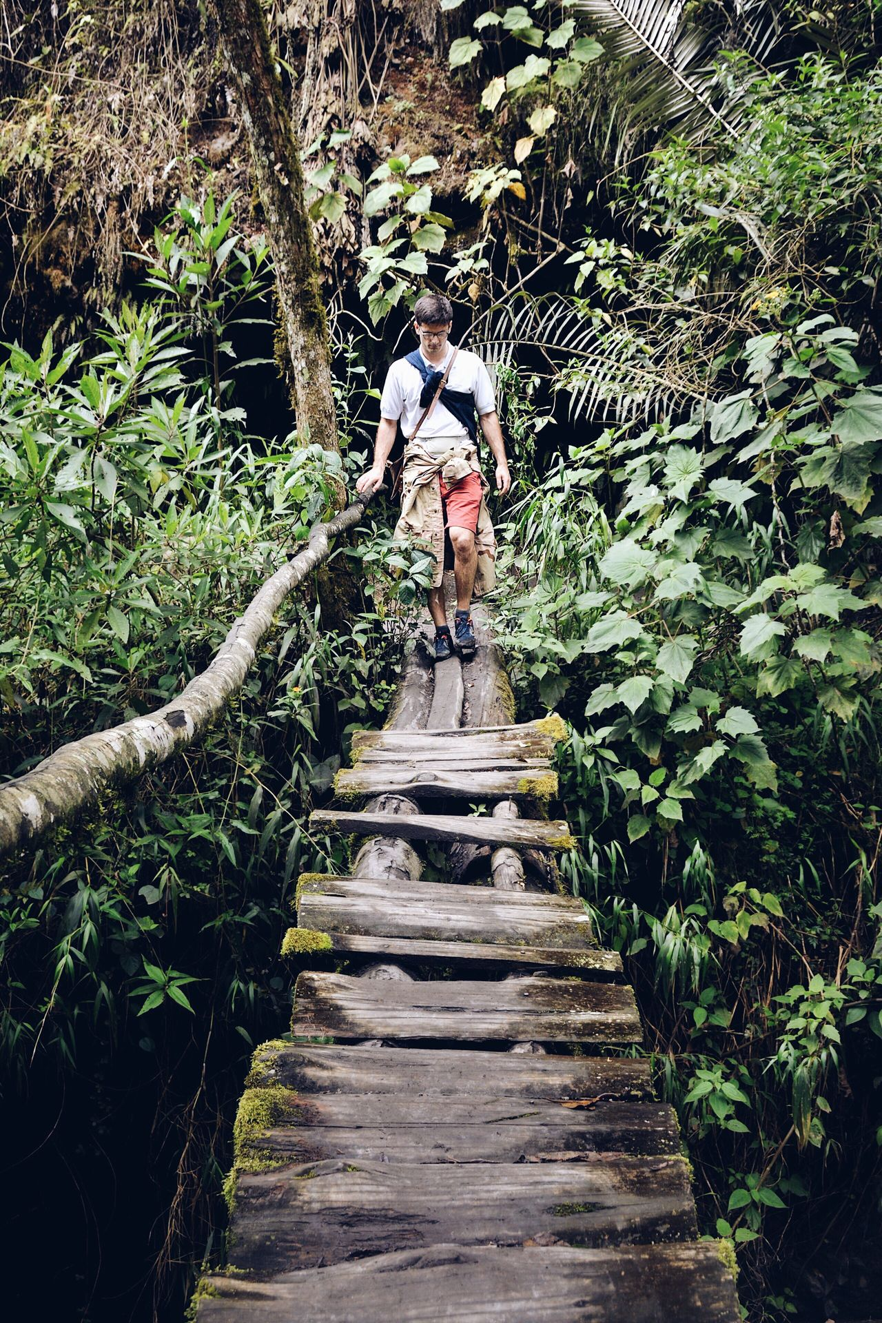 You don't know if it is going to fall apart. You just have to make a leap of faith. One Person Real People Outdoors Nature Steps And Staircases The Way Forward People Colombia Tropical Forest Wildlife & Nature Trekking Exploring Landscape Adventure Men Crossing Crossing The Bridge