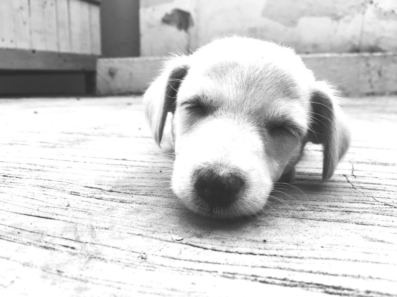 Tell Kush something cute😊 Dog One Animal Pets Domestic Animals Animal Themes Mammal Puppy Day Indoors