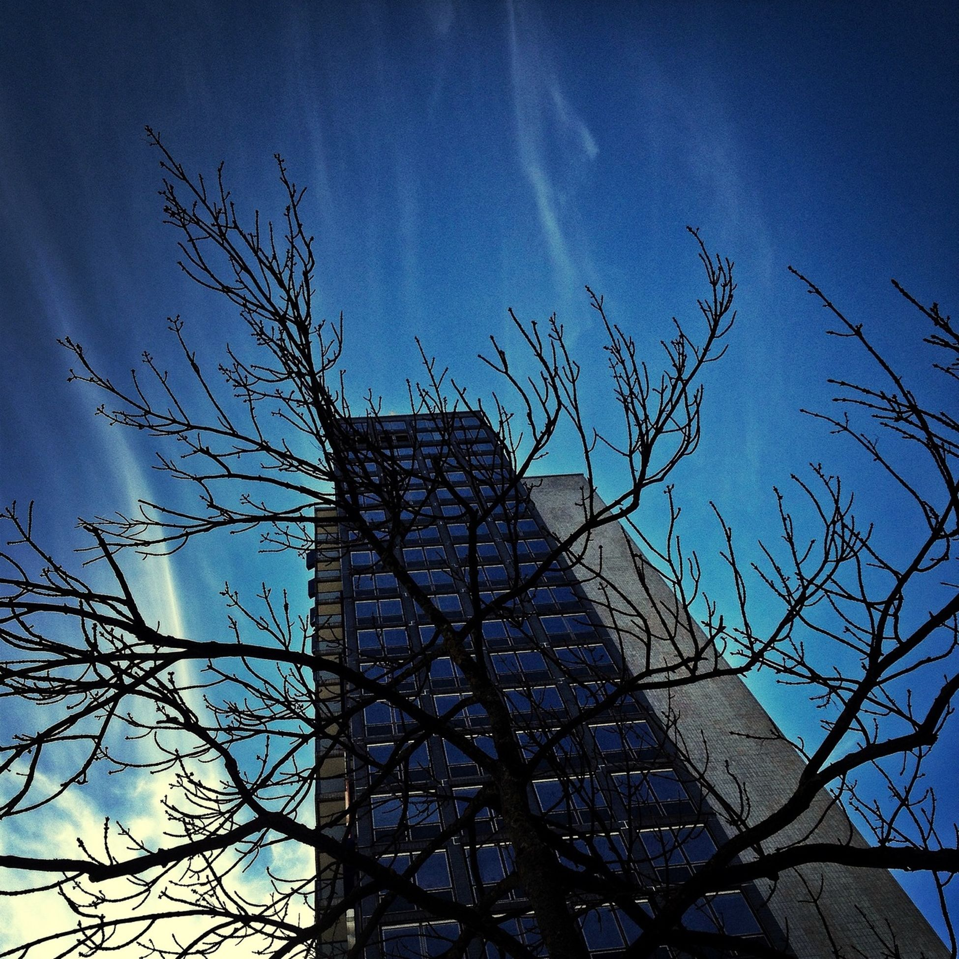 low angle view, architecture, built structure, bare tree, building exterior, sky, blue, branch, tree, tower, clear sky, day, sunlight, outdoors, tall - high, no people, silhouette, building, city, architectural feature