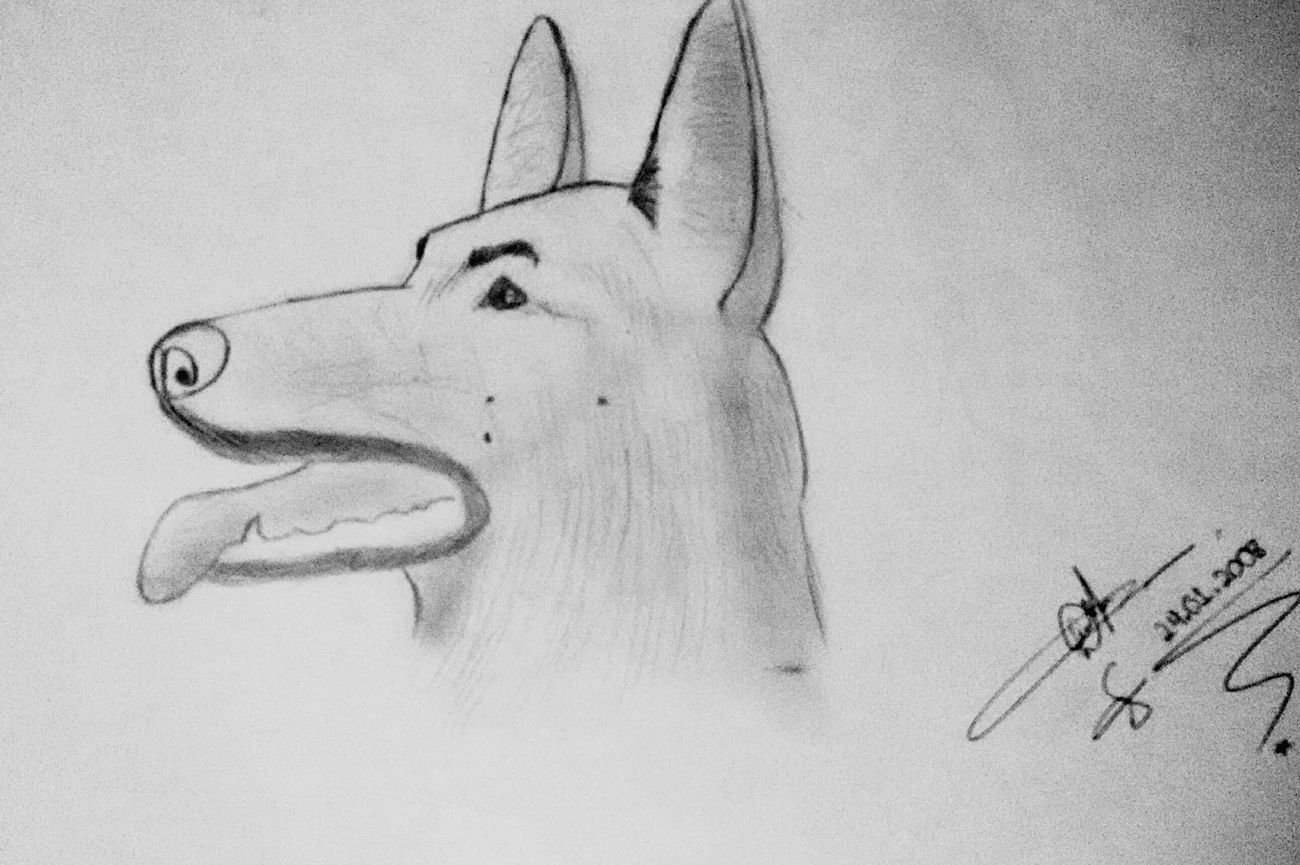 Drawing Dibujo Desenho Dog Art Artistic Animal Portrait LM_colection Art Gallery My Drawing