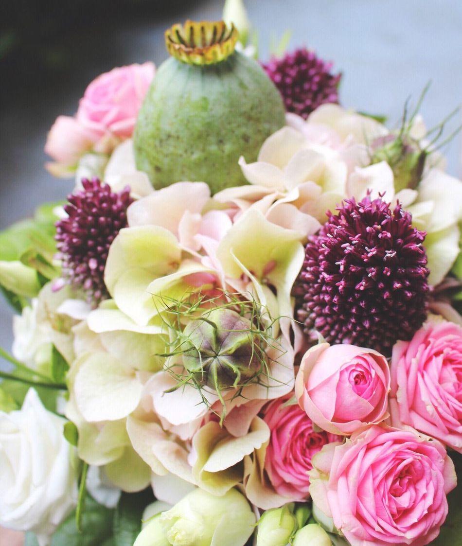 Beautiful stock photos of roses,  Abundance,  Beauty In Nature,  Blossom,  Botany
