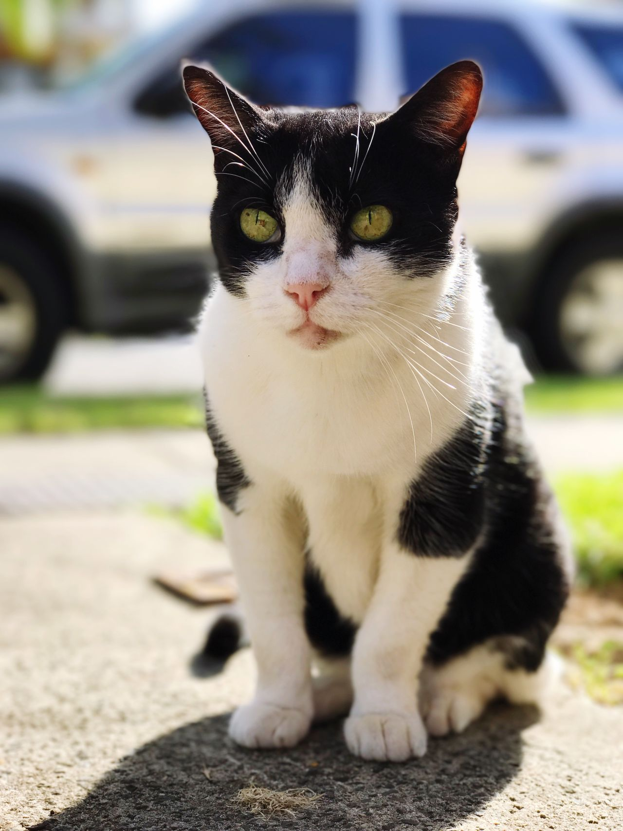 Shotoniphone7plus Portrait Cats Of EyeEm