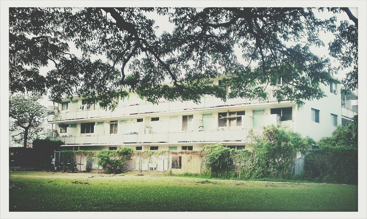 tree, building exterior, architecture, built structure, no people, outdoors, day, grass, growth, sky, scenery, nature
