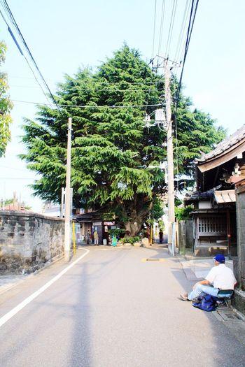 Tokyo Green Wood Street