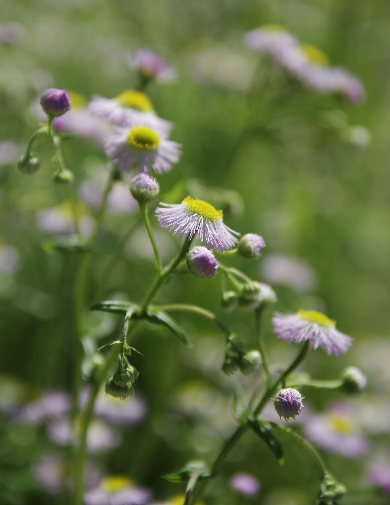 Sweet tiny. Flower Plant Nature Fragility Day Outdoors Beauty In Nature Growth Flower Head Close-up Freshness Depth Ot Field Blurred Foreground Blurredbackground Photography