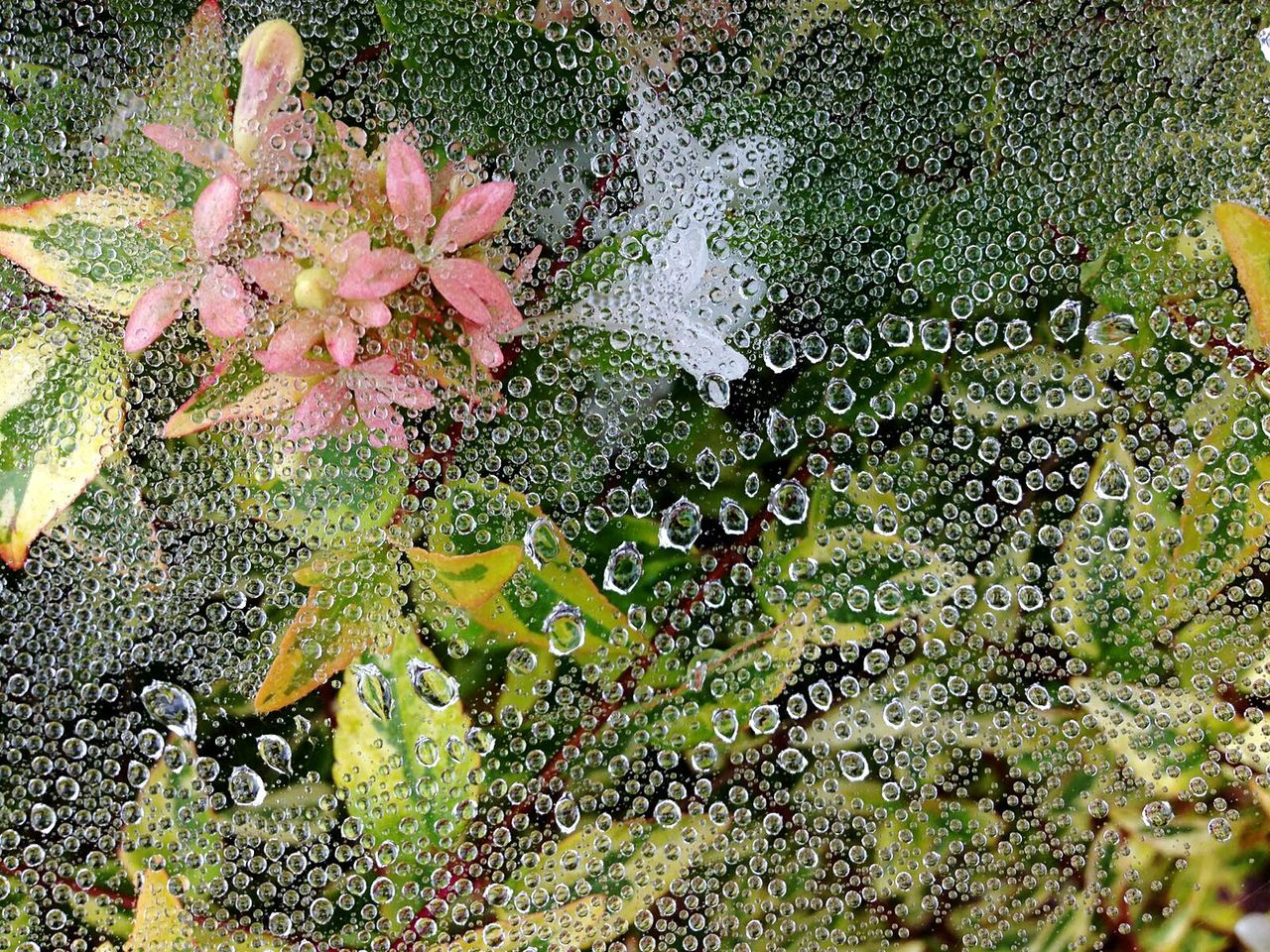 Dew Drops On Leaf Dew Drops On Spider Web Season  WaterClose-up Nature Beauty In Nature Outdoors Green Color Flower Season  Freshness