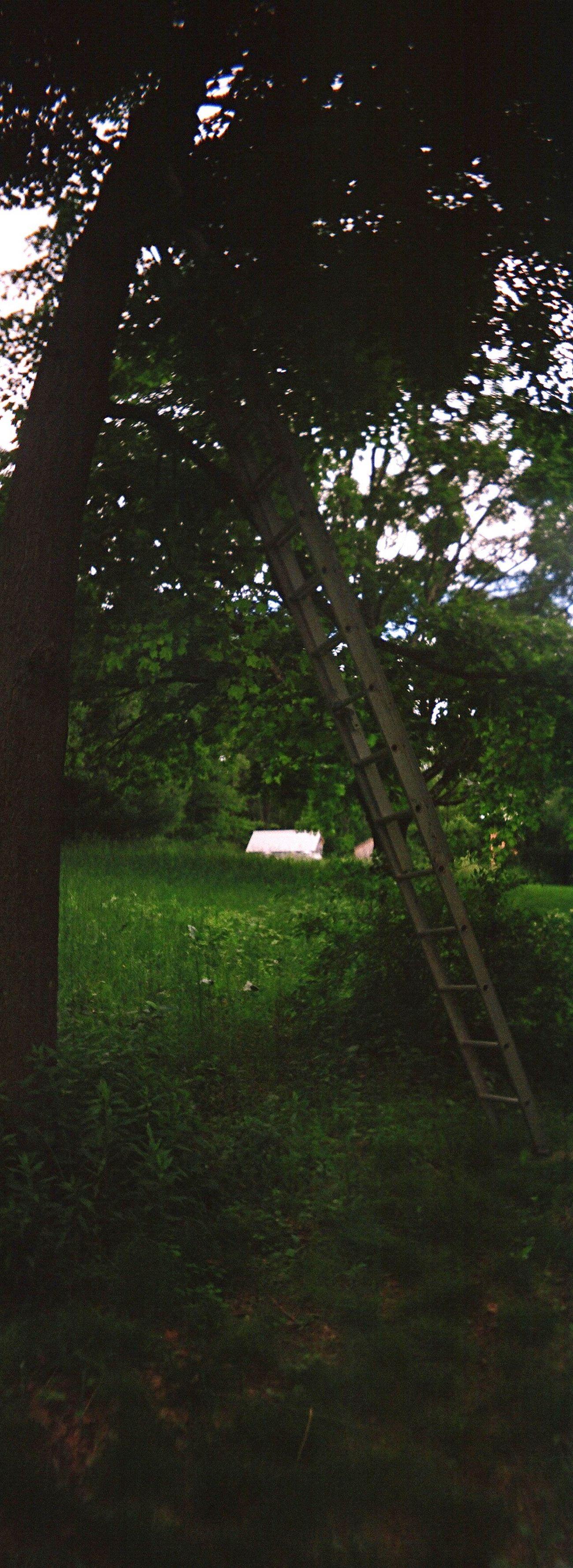 Grass Koduckgirl Ladder Tree Climb Film Sprocket Rocket Panorama Country Life No People