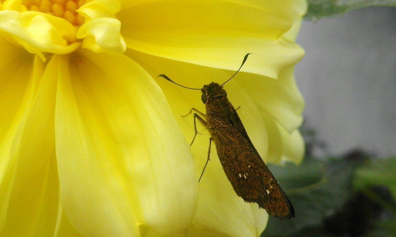 one animal, insect, animal themes, animals in the wild, close-up, no people, yellow, day, nature, outdoors