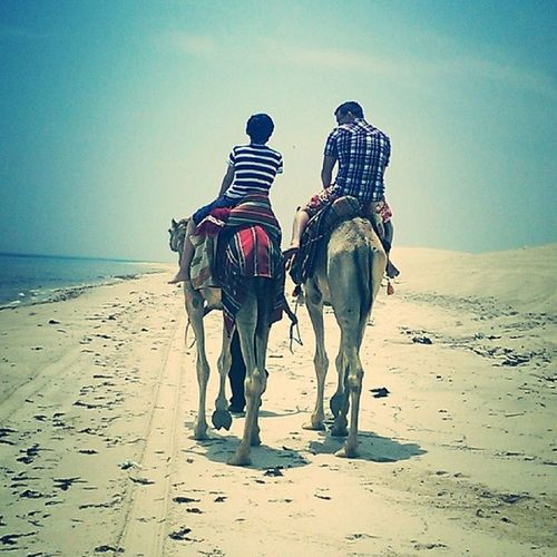 Brothers... Cute Sunmmer Sunny Camel family Qatar sea beach
