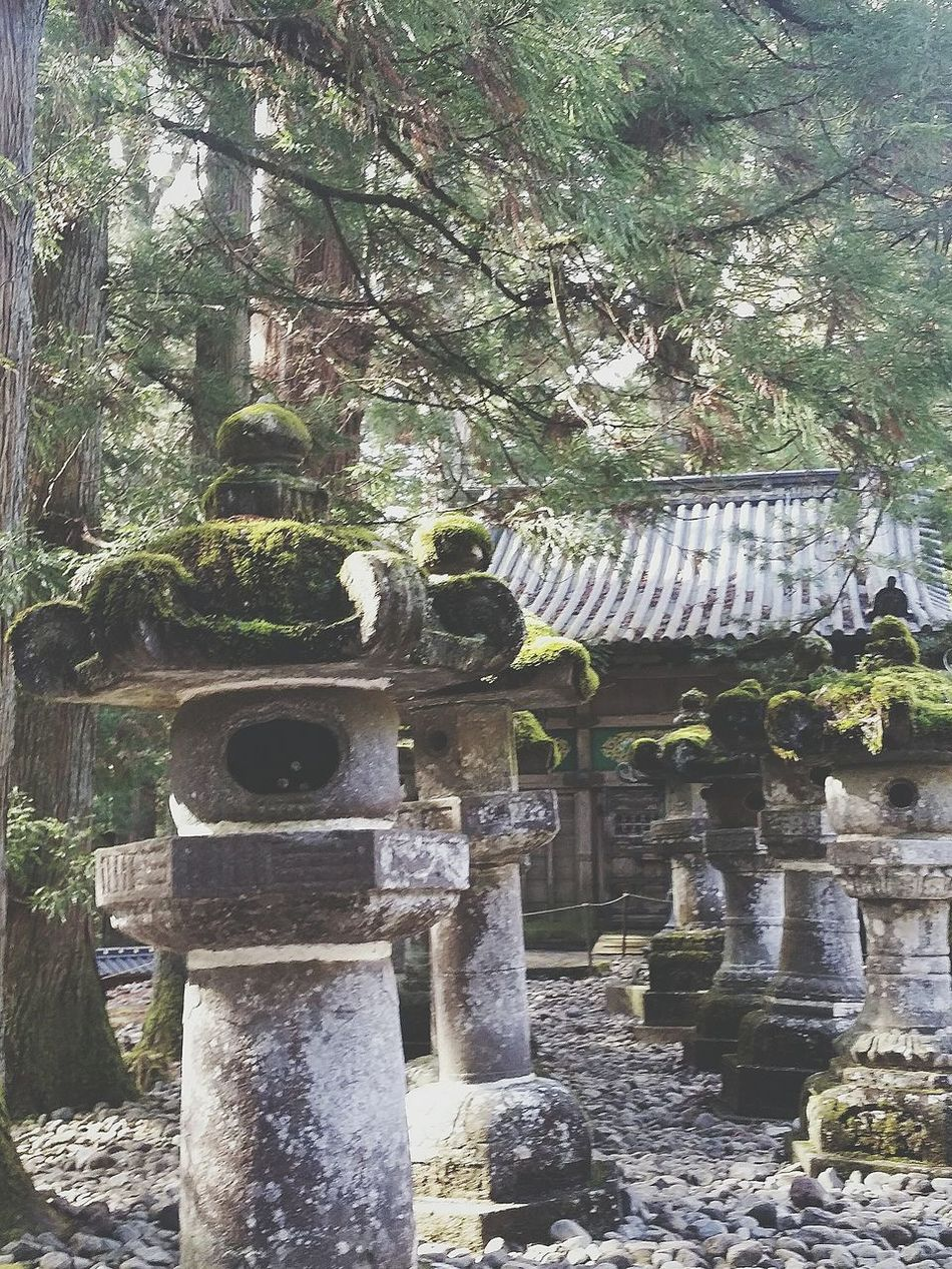 Moss Light And Shadow Trees Stone Lanterns Shrine Nikko Autumn Nature Naturelovers Nature_collection Naturephotography EyeEm Nature Lover Tochigi Prefecture Japan Travelphotography Asian Culture Japanese Culture