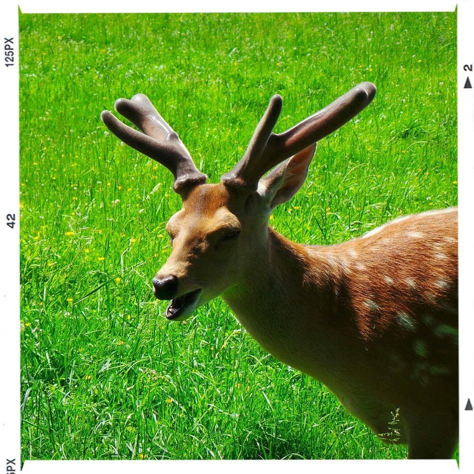 Elk Nature Animals