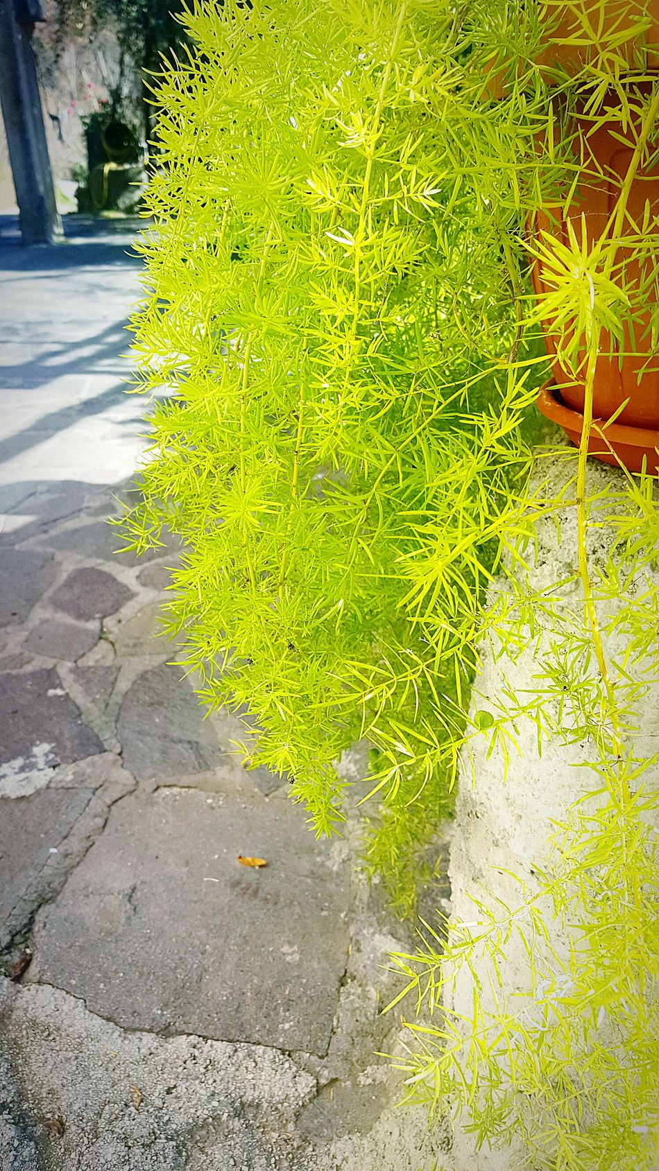 fiori Green Color Yellow Nature Beauty In Nature No People