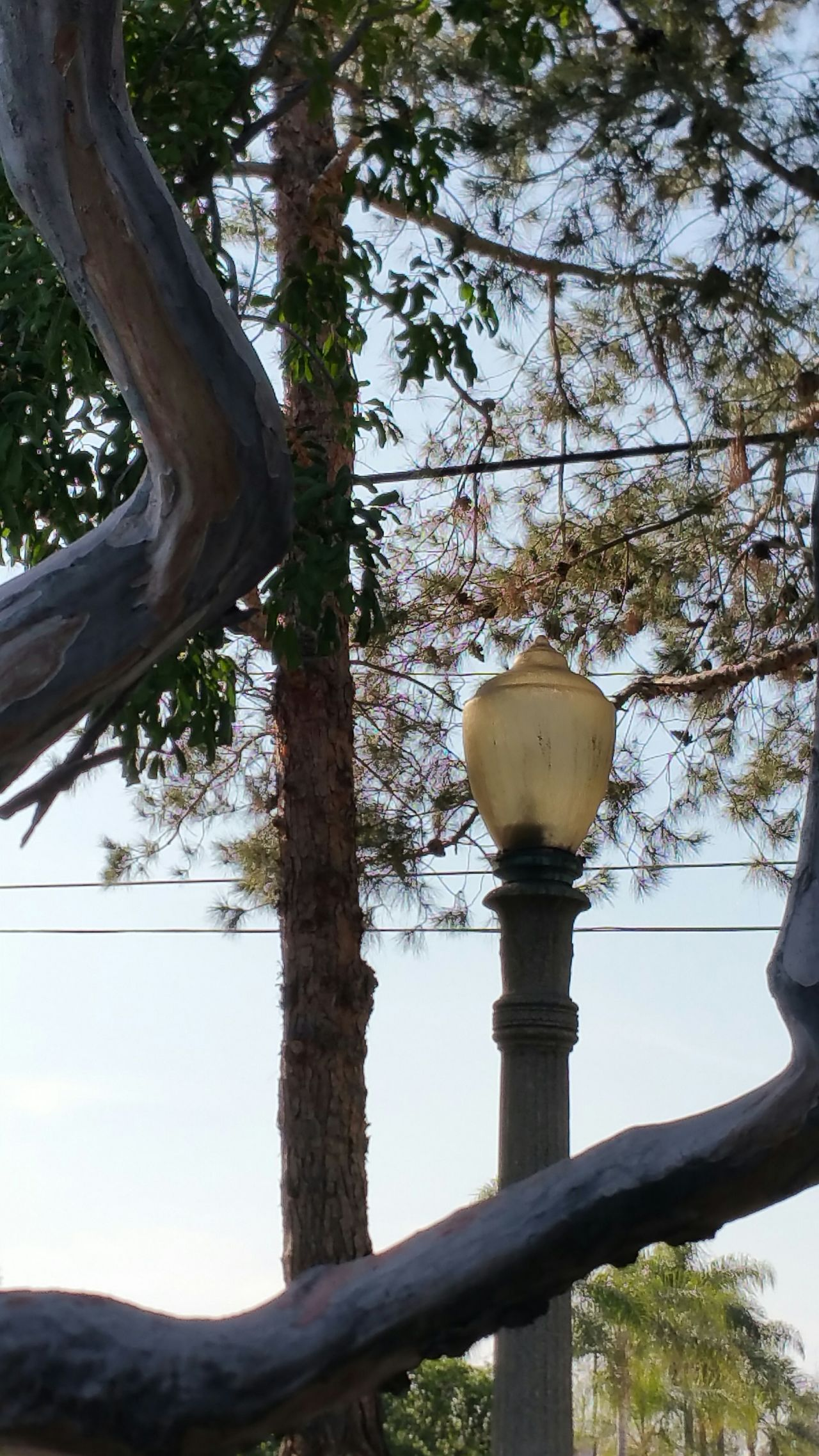 Walking Around Communing With Nature The Purist (no Edit, No Filter) Check This Out Tranquil Scene Beautiful Day Nature_collection Lamp Post Framedbynature This Week On Eye Em Leaves Simple Beauty EyeEm Nature Lover Tree_collection
