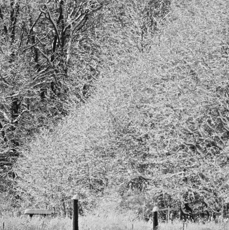 Blackandwhite Photography Cold Cold Temperature Day Field Landscape Meadow Outdoors Rural Scene Snowcovered Snowcoveredtrees Snowy Snowy Branches The Way Forward Winter