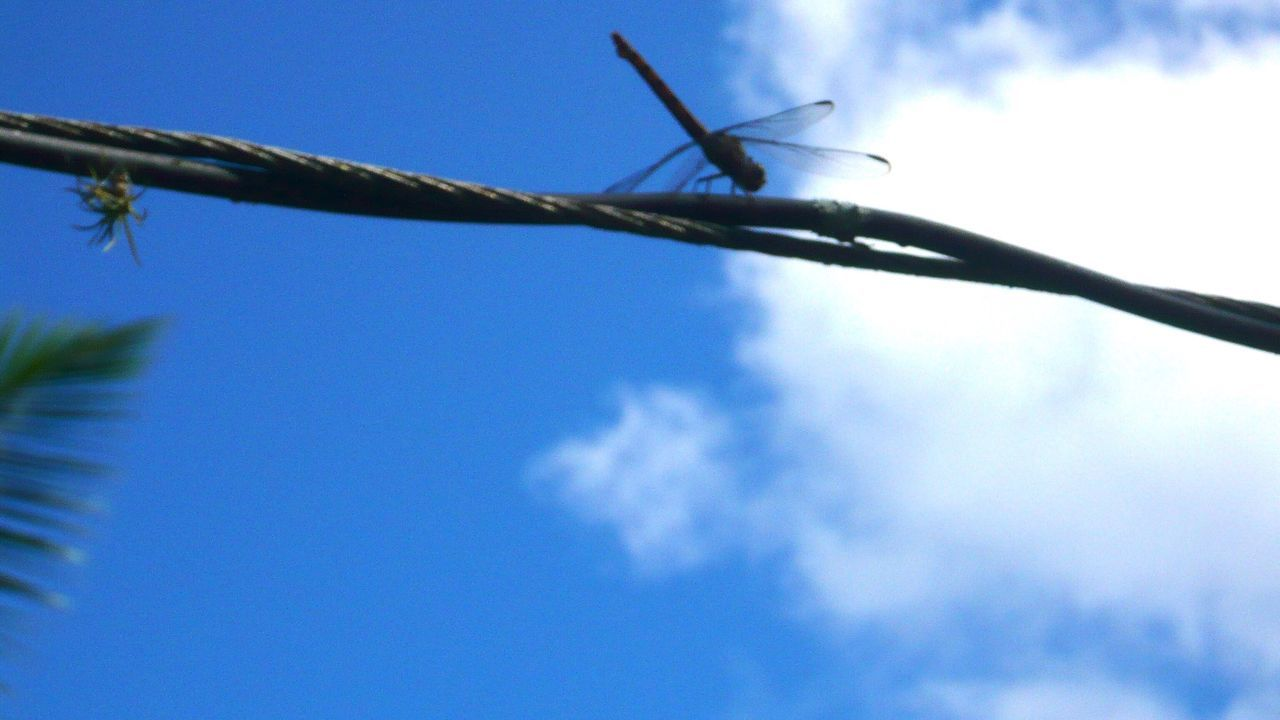 Sky Low Angle View No People Close-up Nature Spiky Day One Animal Outdoors Animal Themes dragonfly