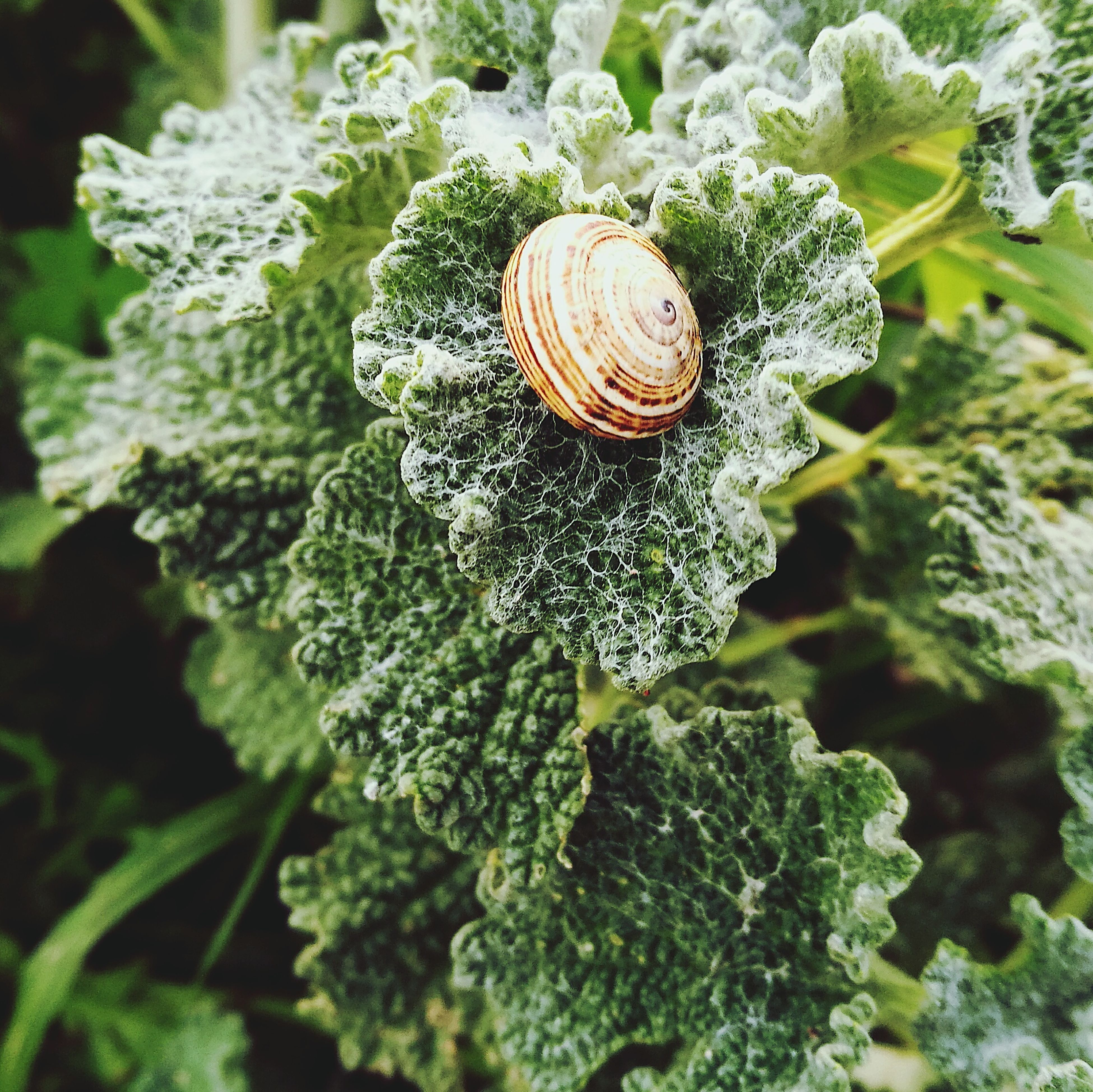animal themes, snail, nature, gastropod, wildlife, one animal, animals in the wild, close-up, outdoors, leaf, fragility, no people, day