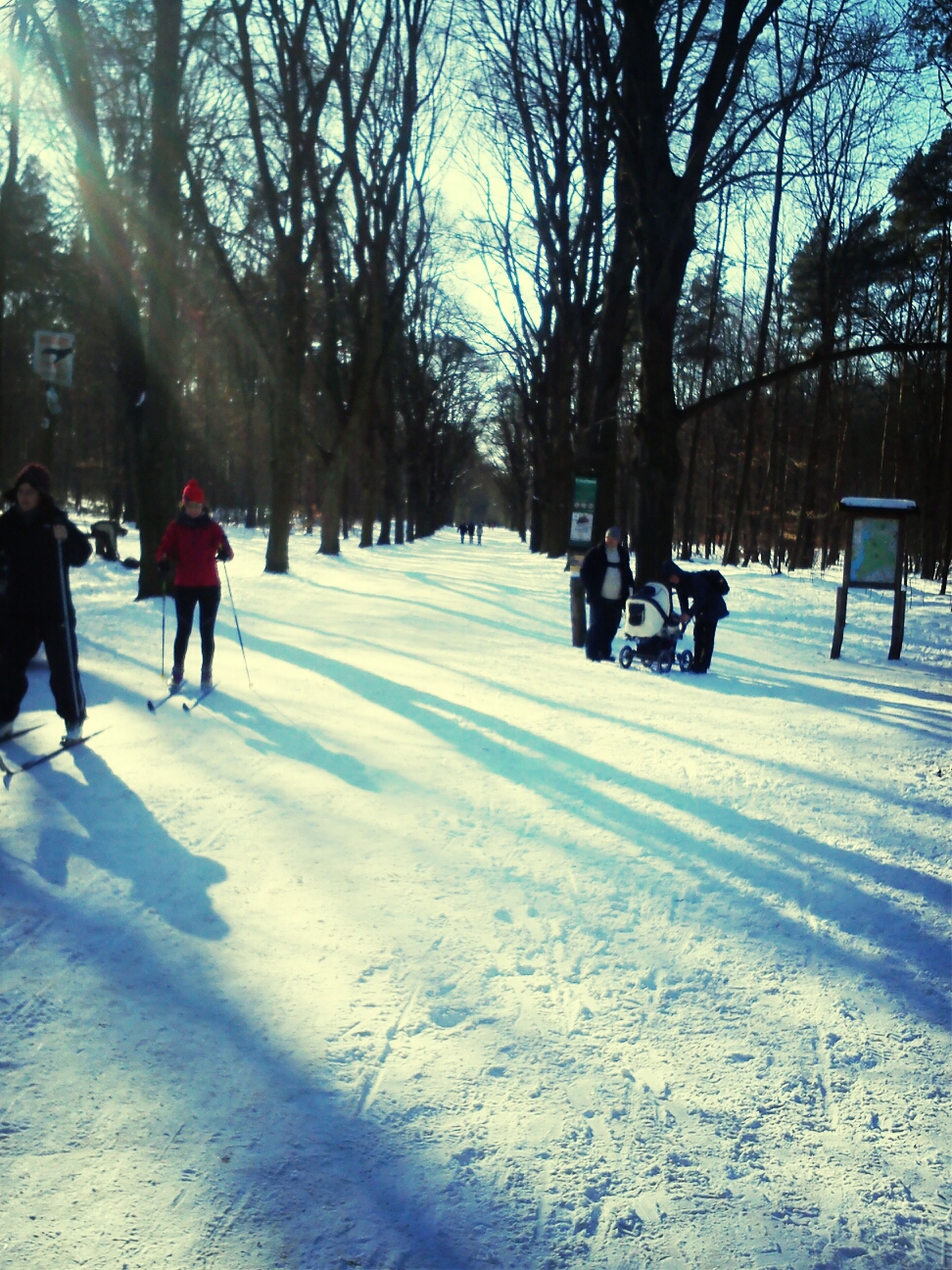 snow, winter, cold temperature, tree, walking, leisure activity, lifestyles, season, men, full length, the way forward, weather, shadow, sunlight, transportation, bare tree, white color, rear view, person