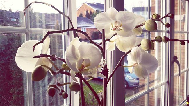 First Eyeem Photo Flowerporn Flowerpower Flower Collection. Orchids