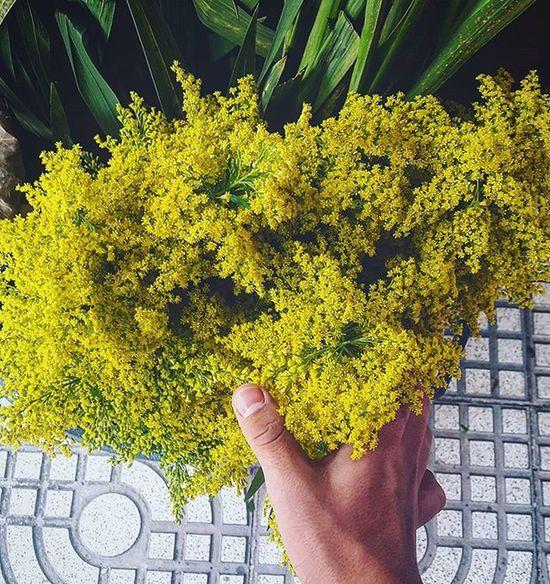 Vscogood Vscocam Flowers Floor Me Hand Yellow Enero Guate