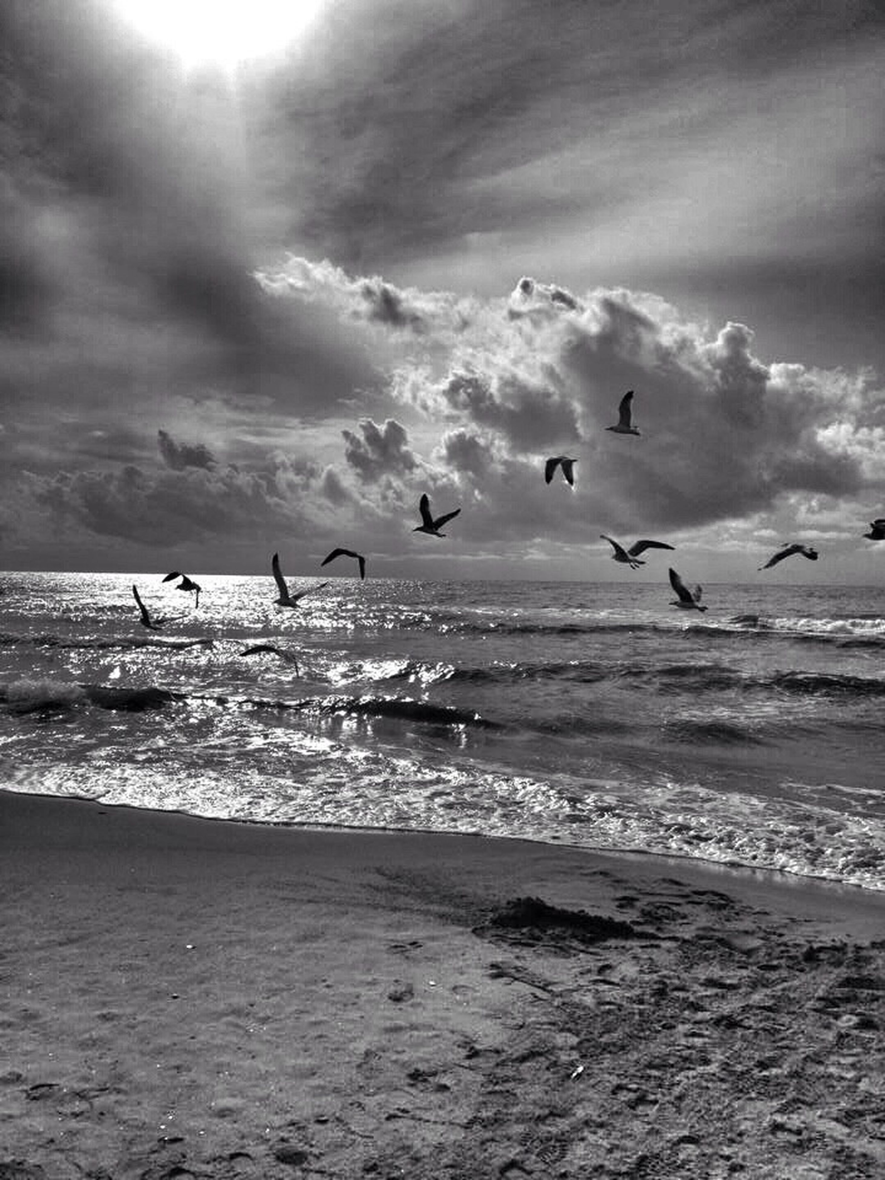 sea, bird, beach, flying, water, animal themes, horizon over water, animals in the wild, sky, wildlife, shore, beauty in nature, scenics, nature, seagull, flock of birds, sand, cloud - sky, tranquil scene