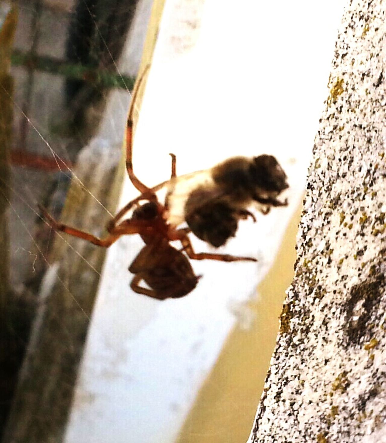 Hello World Check This Out Hanging Out Open Edit For Everyone Estepona Fotography Smartphone Photography Nature Photography Spinne Und Biene National Geographic Insect Photography