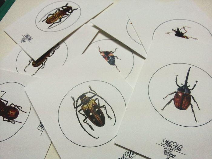 明信片印好了。准备开售。 Insects  Drawing ✏ Art Illustration Watercolor Enjoying Life 汕头 深圳